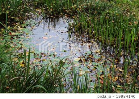 水草と池 19984140