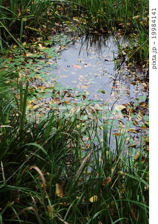 水草と池 19984141