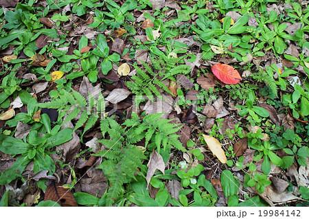 赤い落ち葉 19984142