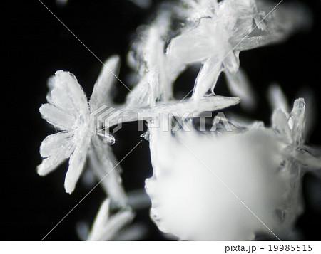 炭酸水素ナトリウム(重曹)の結晶 19985515