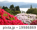 ツツジ 花 風景の写真 19986869