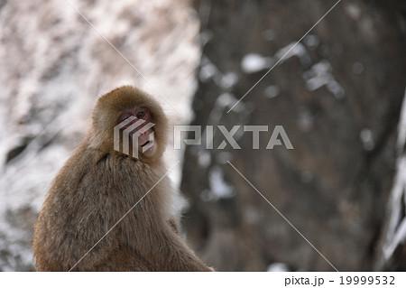 ガン見猿の写真素材 [19999532] ...