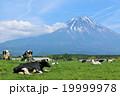 初夏の富士山と牧場の牛たち 19999978