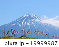 初夏の富士山と鯉のぼりの風景 19999987