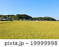 秋晴れ 田んぼ 稲の写真 19999998
