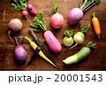 根菜 野菜 カラフルの写真 20001543