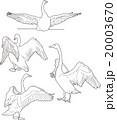 白鳥線画 20003670