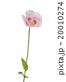 ポピー ポピー けしの写真 20010274