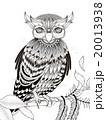 梟 ベクター 鳥のイラスト 20013938