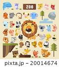 動物 くま クマ 20014674