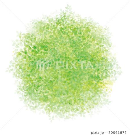 新緑模様 20041675