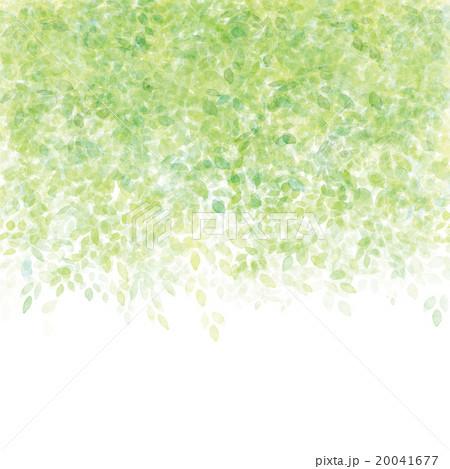 新緑模様 20041677
