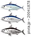 カツオ 魚 ベクターのイラスト 20041878