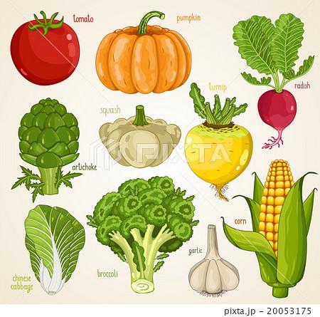 Vegetables vector mix. Organic food, farm food.  20053175