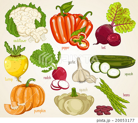 Vegetables vector mix. Organic food, farm food.  20053177