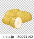 食 料理 食べ物のイラスト 20053192