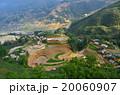ベトナム サパ 棚田の写真 20060907