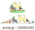 ペットのセット、一列とグループ 20062493
