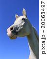 青空と白馬 20063497