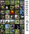 動物 鳥 コレクションの写真 20063816