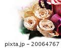 バラ  20064767
