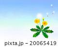 たんぽぽと綿毛 20065419