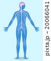 人間の神経系統図 ベクターイラスト 20066041