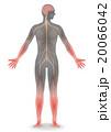 人間の神経系統図 ベクターイラスト 20066042