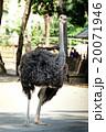 動物 鳥 羽の写真 20071946