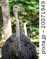アフリカ大陸 動物 鳥の写真 20071949
