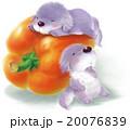 犬とオレンジパプリカ B 20076839