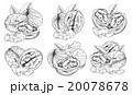 ベクター くるみ 胡桃のイラスト 20078678