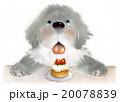 いちごのケーキ 20078839