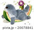 スイカにあごのせ 20078841