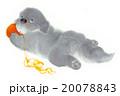 毛糸遊び 20078843