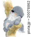 20078862