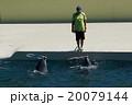 イルカショー 20079144