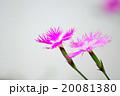 20081380