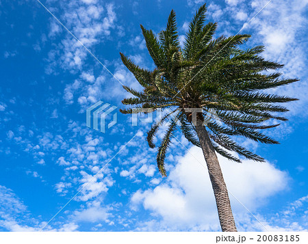 palm trees in the blue sunny sky 20083185