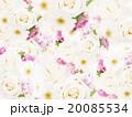 薔薇 花 ナチュラルのイラスト 20085534