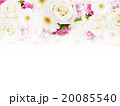 薔薇 花 ナチュラルのイラスト 20085540