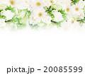 薔薇 花 ナチュラルのイラスト 20085599