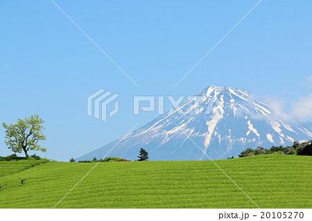 富士山と茶畑 20105270