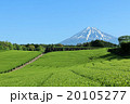 富士山 山 茶畑の写真 20105277