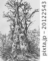 縄文杉 20122543