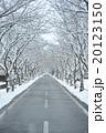 雪の道 20123150