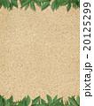 葉 植物 ナチュラルのイラスト 20125299