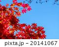 錦秋 (14) 20141067