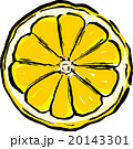 グレープフルーツ 20143301