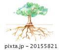 木 大木 根のイラスト 20155821